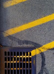 Yellow Stripes_896