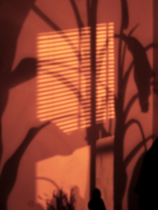 Nightime Shadows_381