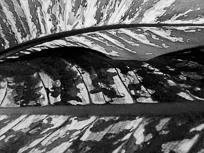 Leaf Landscape_087