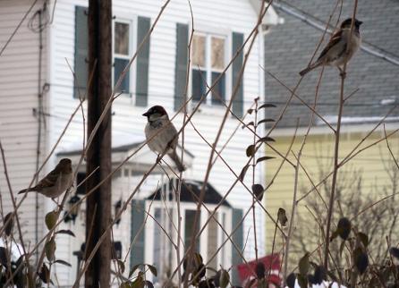 Bird House_4087