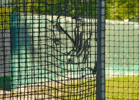 Batting Cage_9572