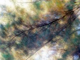 Long Branch_0211