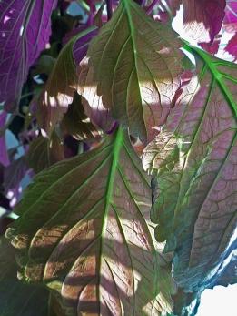 Leafy Greens_1948