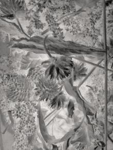 Dried Botanicals | 1500